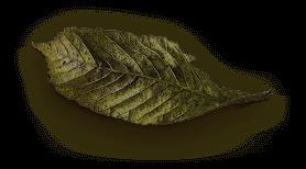 Tiltay Spice Green Leaf